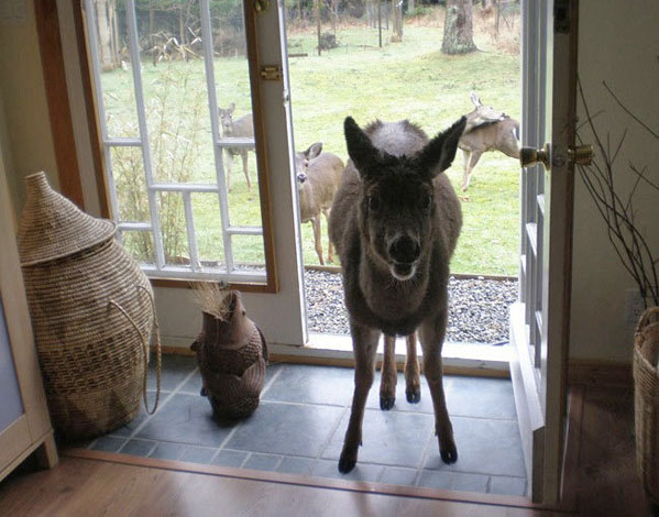 Image result for creepy deer